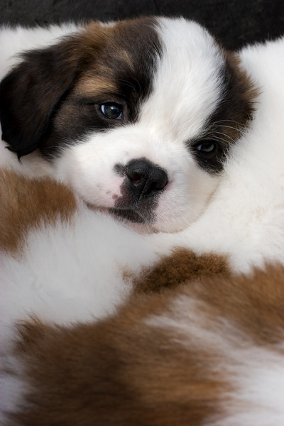 puppies-21-Edit