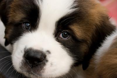 puppies-8-Edit-2