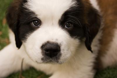 puppies-3-Edit