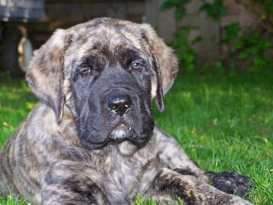 Puppy Benson
