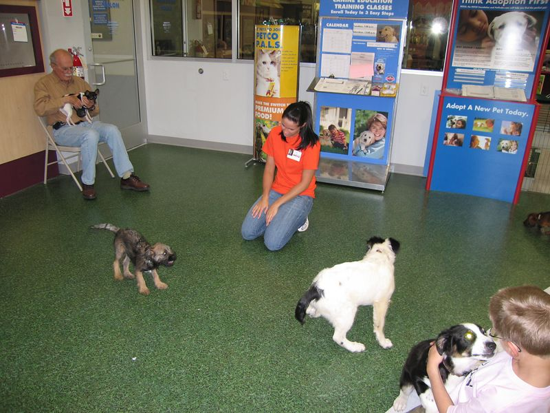 April 26, 2005 - Petco puppy school - Jett is getting barked at by some little terrier - Scout is licking a kids face