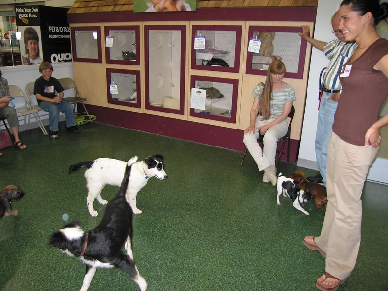 May 3, 2005 - Puppy school session #2
