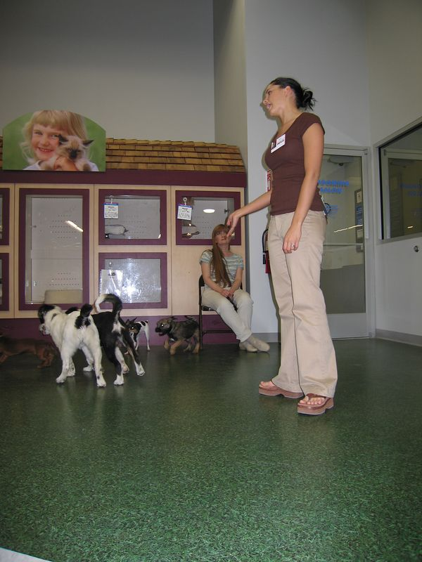 Puppy school teacher