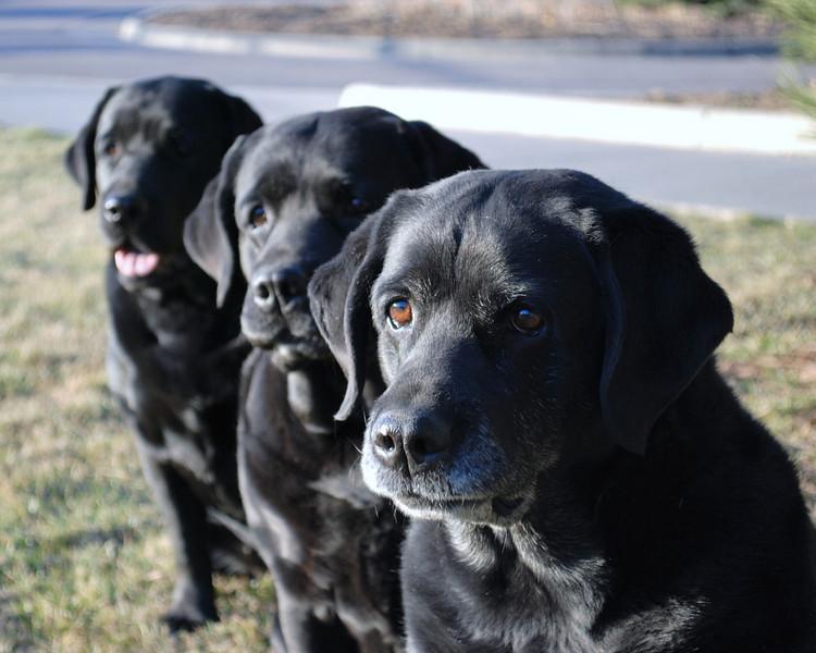 Lexi, Josi, and Shadow