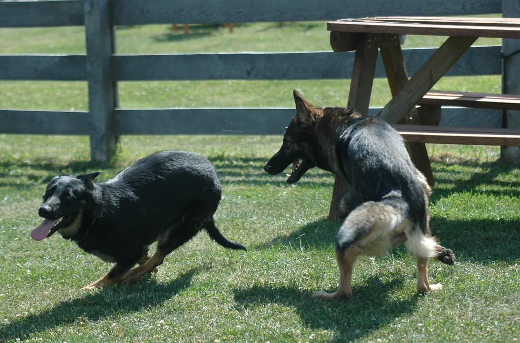 Quinn and Quasi, 20 months, June 2012