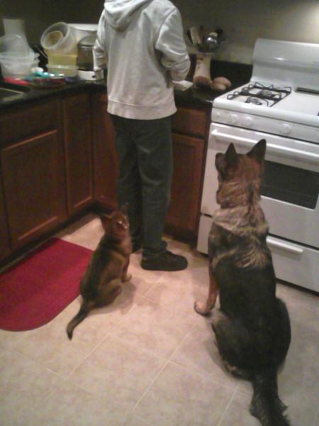 Puppy Quasi and Floh :)