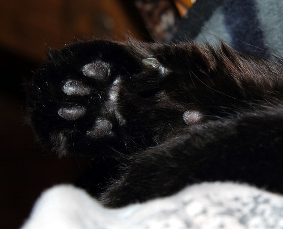 Newtie's paw