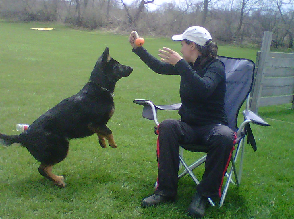 quinn, spring 2011<br /> first training session after bill's transplant