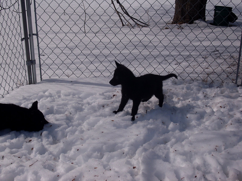 Six weeks old, exploring after the blizzard of 2011 :)