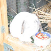 Bunny, mother of 5 little ones born 5/24/08.