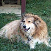 Abbe went to Rainbow Bridge at 8 years on 7/16/2000