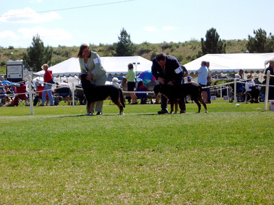 Friday's Rally Obedience Journal