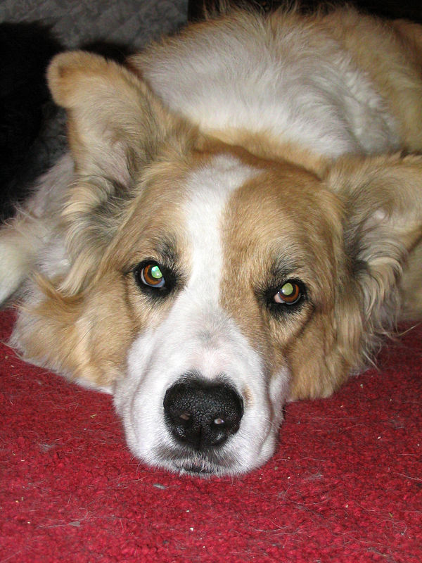 Ralph (1992-2005)