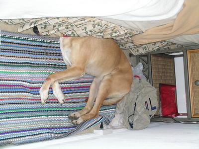 Gala was very tired after the trip.  A good place to stick your head is under the bed.