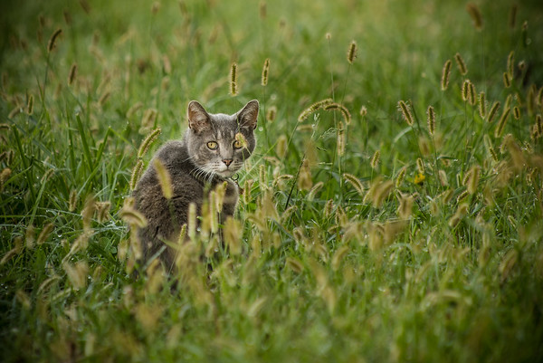 My cat in the grass.<br /> <br /> Photographer's Name: Terry Lynn Ayers<br /> Photographer's City and State: Anderson, Ind.