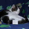 """Simon and his HB """"lost cat"""" ad.  Back home and happy!!<br /> <br /> Photographer's Name: Dara Williams<br /> Photographer's City and State: Anderson, IN"""