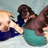 Three little pups from school are we.<br /> <br /> Photographer's Name: Jack D. Reynolds<br /> Photographer's City and State: Anderson, Ind.