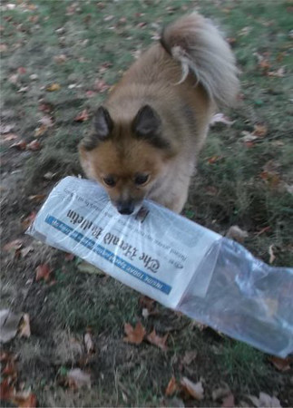 Dudley starts every  morning with the Herald Bulletin!<br /> <br /> Photographer's Name: Vicky Robinson<br /> Photographer's City and State: Anderson, Ind.