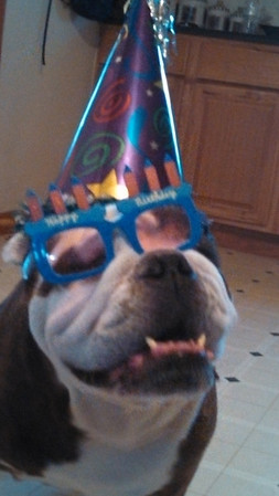 My granddog Samson on his eighth birthday.<br /> <br /> Photographer's Name: Sandy Fenwick<br /> Photographer's City and State: Anderson, Ind.