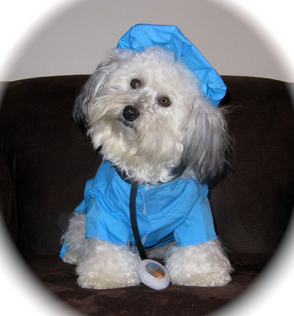 Dr. Gizmo at your service!<br /> <br /> Photographer's Name: Cheryl Hardacre<br /> Photographer's City and State: Anderson, IN