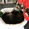 Henry Charles in his favorite basket<br /> <br /> Photographer's Name: Jan Baker<br /> Photographer's City and State: Daleville, Ind.