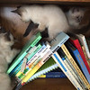 Three little kittens on the bookshelf<br /> <br /> Photographer's Name: Jamie Milner<br /> Photographer's City and State: Pendleton, Ind.
