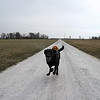 Walking on air (gotta make you smile on a Monday morning): Captain Jack running down the farm lane. Farm dogs rule. :)<br /> <br /> Photographer's Name: J.R. Rosencrans<br /> Photographer's City and State: Alexandria, Ind.