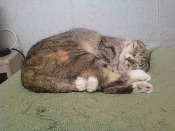 My cat Stormy doing cat yoga in the morning<br /> <br /> Photographer's Name: Christine Graham<br /> Photographer's City and State: Anderson, IN