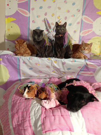 Easter. Front row: Piglet, Miss Piggy and Star. Back row: Punkin, Lucky, Sassy and Tommy.<br /> <br /> Photographer's Name: Amy Heard<br /> Photographer's City and State: Alexandria, Ind.