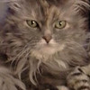 diva..my cat!!!<br /> <br /> Photographer's Name: sheelah schmidt<br /> Photographer's City and State: anderson, IN