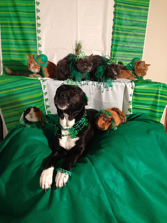 St. Patrick's Day. Front row: Piglet, Star and Miss Piggy. Back row: Tommy, Sassy, Lucky and Punkin.<br /> <br /> Photographer's Name: Amy Heard<br /> Photographer's City and State: Alexandria, Ind.
