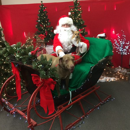 Barkley and Duchess got their picture taken with Santa at Northgate Hardware  with proceeds going to the Humane Society. Merry Christmas!<br /> <br /> Photographer's Name: Brenda Caldwell<br /> Photographer's City and State: Anderson, Ind.