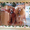 Sadie and Rose. <br /> <br /> Photographer's Name: Sandra Osenbaugh<br /> Photographer's City and State: Middletown, Ind.