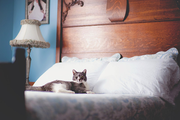 Our cat, Jag, making himself comfortable in the guest bedroom.<br /> <br /> Photographer's Name: Terry Lynn Ayers<br /> Photographer's City and State: Anderson, IN