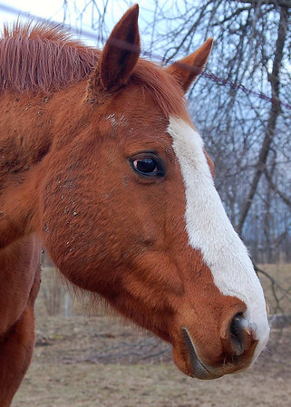 """Her name is """"Time's Eternal Dream"""" but we call her Dreamy<br /> <br /> Photographer's Name: Amber Ryder<br /> Photographer's City and State: Daleville, IN"""