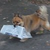 Dudley's daily routine  of bringing in The Herald Bulletin   for a slice of cheese.<br /> <br /> Photographer's Name: Jeffrey Pettigrew<br /> Photographer's City and State: Anderson, Ind.