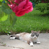 Mishka enjoying a warm day!<br /> <br /> Photographer's Name: Sheri Heath<br /> Photographer's City and State: Anderson, Ind.