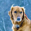"""The Dog Days of Winter""<br /> <br /> Photographer's Name: J.R. Rosencrans<br /> Photographer's City and State: Alexandria, IN"
