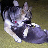 German shepherd Kara and her best friend Joe are inseparable!  <br /> <br /> Photographer's Name: Frankie Koons<br /> Photographer's City and State: Middletown, IN