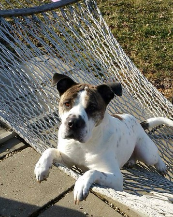 Kingston relaxing on the hammock<br /> <br /> Photographer's Name:  <br /> Photographers City and Country: ,