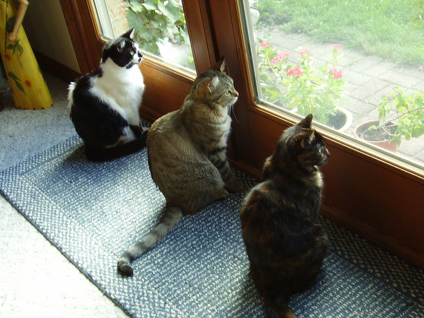 Bella, Little Boy, and Hallie watching birds.<br /> <br /> Photographer's Name: Jerry and Cheryl Warthman<br /> Photographer's City and State: Middletown, Ind.