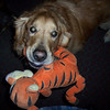 Neo with his friend tigger<br /> <br /> Photographer's Name: Kevin Wolfgang<br /> Photographer's City and State: Anderson, IN