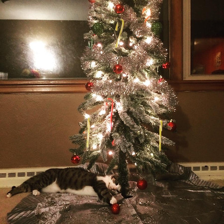 """My grandkitty, Nylia, enjoying """"her"""" Christmas tree!<br /> <br /> Photographer's Name: Janet Neese-Hoffman<br /> Photographer's City and State: Frankton, Ind."""