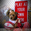 Play at your own risk!<br /> <br /> Photographer's Name: Cathy Smithson<br /> Photographer's City and State: Summitville, Ind.