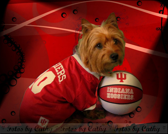 Go Big Red!<br /> <br /> Photographer's Name: Cathy Smithson<br /> Photographer's City and State: Summitville, Ind.