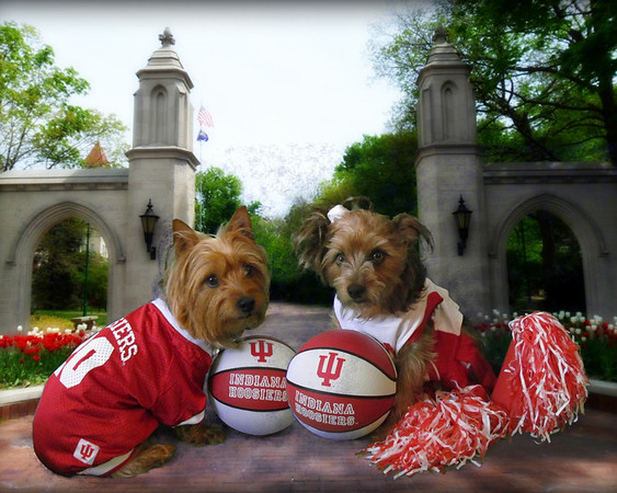 Go Hoosiers!<br /> <br /> Photographer's Name: Cathy Smithson<br /> Photographer's City and State: Summitville, Ind.