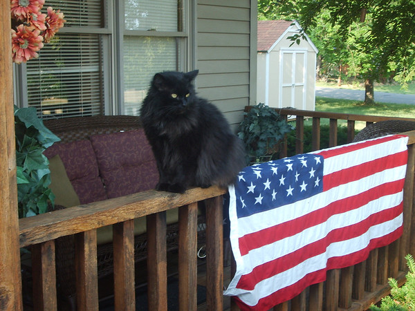 fluffy sitting in front of the flag on my porch<br /> <br /> Photographer's Name: sheelah schmidt<br /> Photographer's City and State: anderson, IN