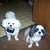"""""""Please, sir, I want some more."""" Trudy and Feynman begging for a treat.<br /> <br /> Photographer's Name: John Van Matre<br /> Photographer's City and State: Anderson, Ind."""