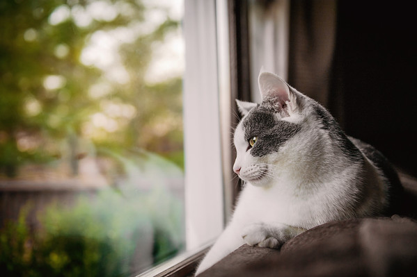 August looks out the window<br /> <br /> Photographer's Name: Terry Lynn Ayers<br /> Photographer's City and State: Anderson, Ind.
