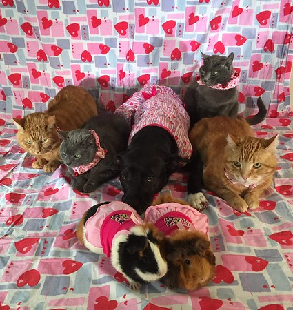 My seven furry Valentines.<br /> <br /> Photographer's Name: Amy  Heard <br /> Photographer's City and State: Alexandria, Ind.